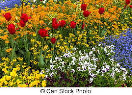 Vertical Flower Bed - stock photographs of flower bed with red tulips and beautiful