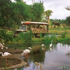 things to do in orlando thanksgiving weekend orlando u0027s top animal attractions travel leisure