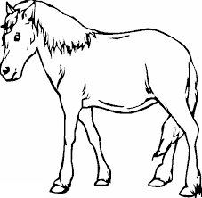 gambar sketsa hewan kuda dp bbm