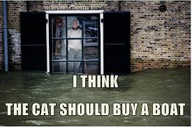 Newspaper Cat Meme - cat i should buy a boat