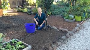 How To Plant A Vegetable Garden In Your Backyard by Sowing Seeds In The Ground Sunset