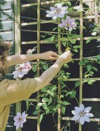 Climbing Plants On Trellis Vines For Container Gardens