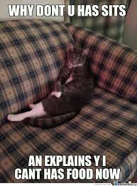 Cat Sitting Meme - my cat sits like this when hes angry by healyman5000 meme center