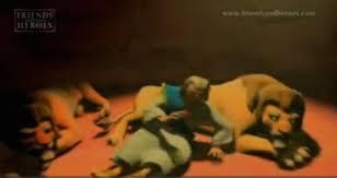 daniel in the lion u0027s den bible story verses u0026 meaning