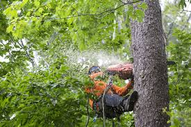 tree service mayer tree service tree removal pruning ma