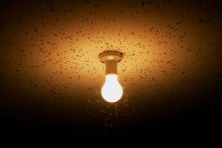 light bulb that doesn t attract bugs newsflash leds don t attract bugs energy circle llc