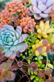 1440 best verde images on pinterest plants succulent plants and