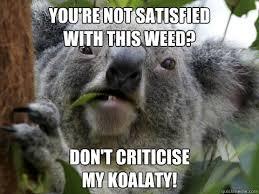 Angry Koala Meme - angry koala memes quickmeme