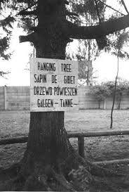 dachau germany a memorial sign on a tree that was used for
