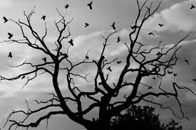 gloomy dead tree crows royalty free stock photography image 858807