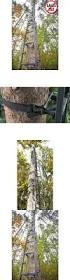 best 25 best climbing tree stand ideas on pinterest cat jungle