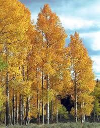 [Super Xịn] Bạn thuộc loại cây gì và bạn là người thế nào? Images?q=tbn:ANd9GcTGiGgC9FpwyL0WGZfyZUkMmp3CN7uARCkAae6PvUVEjUe7w5B0vw