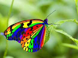 see some of the most beautiful butterflies in the