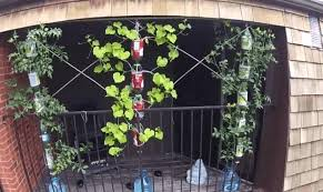 hydroponic systems roundup 33 best hydroponic gardens