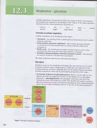cell respiration 2 8 8 2 hl john osborne u0027s teaching u0026 learning