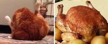 cats that look suspiciously like thanksgiving turkeys meowingtons