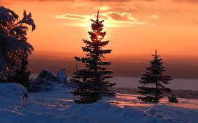 download winter sunset pine tree wallpaper free wallpapers
