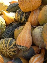 preserving ornamental gourds thriftyfun