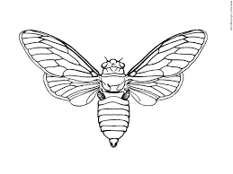 printable insect coloring pages kids u2014 fitfru style