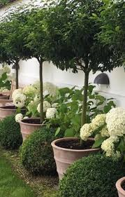 What Is A Topiary 831 Best Decorate With Topiaries Images On Pinterest Flowers