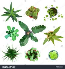 top view big collection plants easy stock vector 453944542