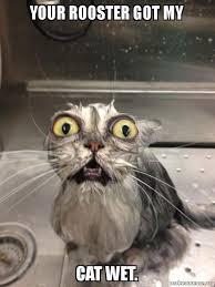 Rooster Meme - your rooster got my cat wet cat bath make a meme