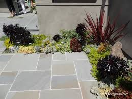 Modern Gardens Ideas Succulent Garden Ideas Mixed Succulent Beds In A Modern Garden
