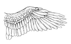 Bird Wing - taking flight a beginner s guide into drawing wings