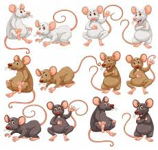 mouse vectors photos and psd files free download