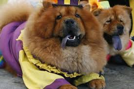 Halloween Costumes For Dogs Best Do It Yourself Halloween Costumes For Pets Photos
