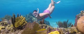 Roatan snorkel package anthony 39 s key resort