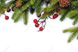 christmas tree border design isolated on white stock photo