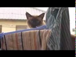 Sail Meme - cat jump fail with music sail by awolnation youtube