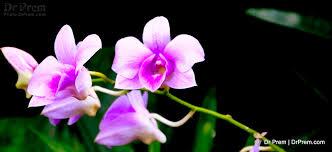 singapore botanic u0026 orchid garden by dr prem drprem