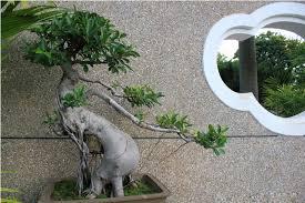 design plastic artificial banyan tree bonsai