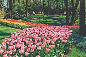 flower garden in amsterdam luxury river cruise line europe asia africa amawaterways