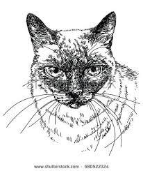 siamese cat head vector hand drawing stock vector 580522324