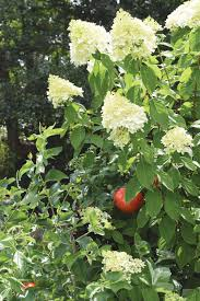 how to combine veggies and ornamentals diy