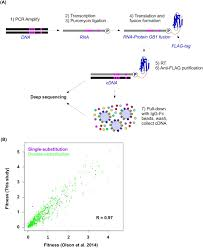 Flag Tag Dna Sequence Adaptation In Protein Fitness Landscapes Is Facilitated By
