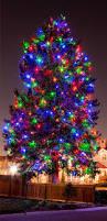 Amber Christmas Lights Amber Colored Christmas Tree Lights Print Amber Colored Christmas