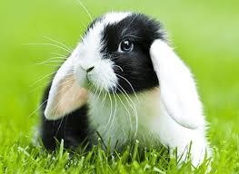 rabbit bunny rabbit food products l purina