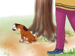 8 month old boxer dog weight 4 ways to train a boxer puppy wikihow