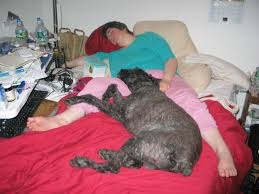 How To Comfort A Cat In Heat How To Tick Check Your Dog Even If He U0027s Big Black And Hairy