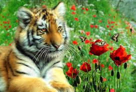 tiger butterflies digital by julie l hoddinott