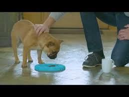 10 Best Slow Feeder Dog Bowls in 2018 Updated