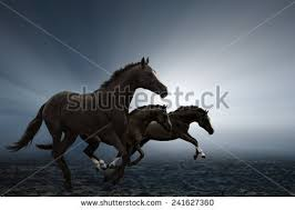 Black Horse Mustang Black Horse Stock Images Royalty Free Images U0026 Vectors Shutterstock