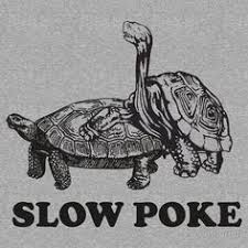 Poke Meme - slow poke funny meme funny memes turtle and memes