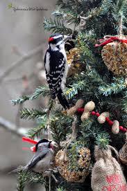 rebecca u0027s bird gardens blog a christmas tree for the birds
