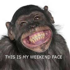 Too Cute Meme Face - 15 animals who are too cute not to conserve tgif face and humour