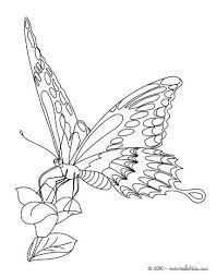 coloring page butterfly monarch coloring page of butterfly monarch butterfly monarch butterfly